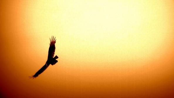 Libertad felicidad ver observar volar percepcion miedo cambio evolucion mello anthony tony aguila cielo atardecer altos vuelos alas desplegadas
