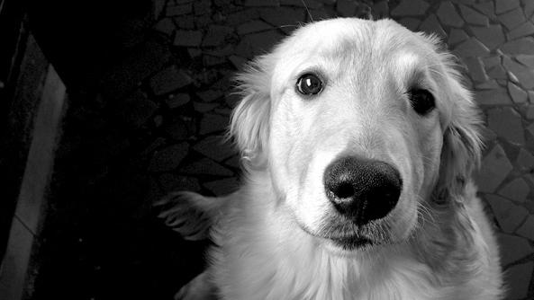 Fabula cuento perro agua miedo atreverse valentia valor motivacion terror animales superacion mirada can dulzura hocico amor