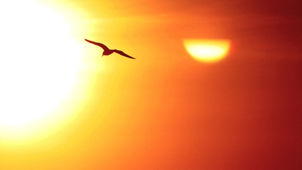 trascender ego vencer libertad psicologia psicoanalisis gestalt volar sol atardecer pajaro ave