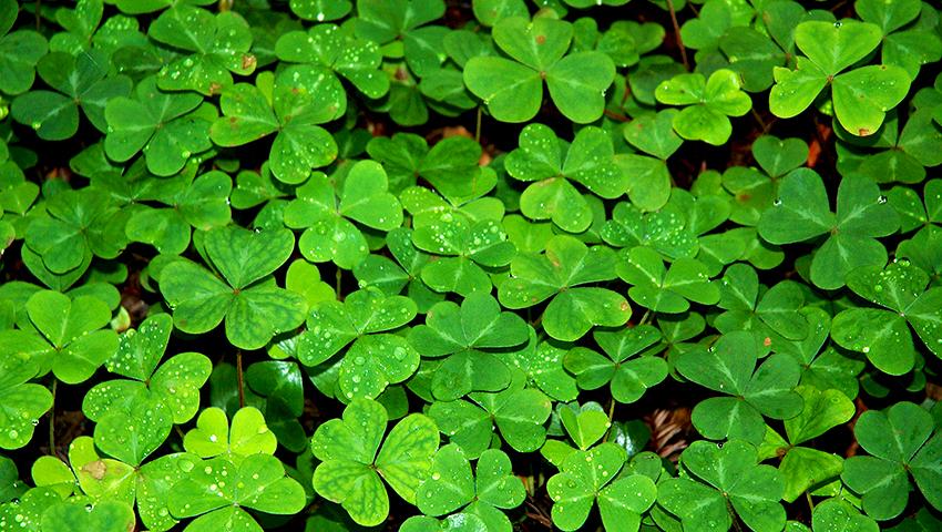 Buena suerte mala suerte qui n sabe inteligencia - Cosas para la buena suerte ...